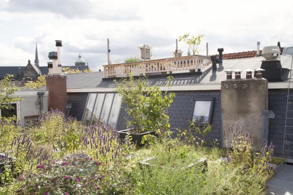 Dakdokters tuin op dak duurzaam verbouwen