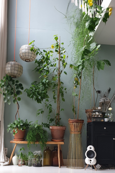 groen in huis voor een beter binnenklimaat